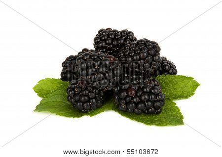 Blackberry and mint