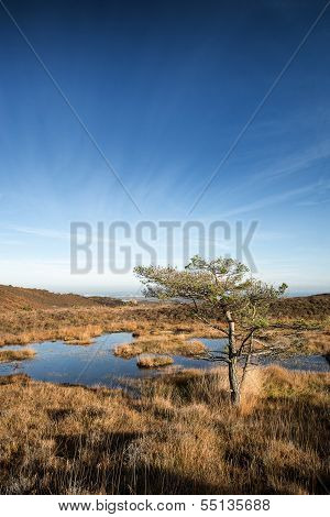 Blue Sky Over Autumn Heath Landscape