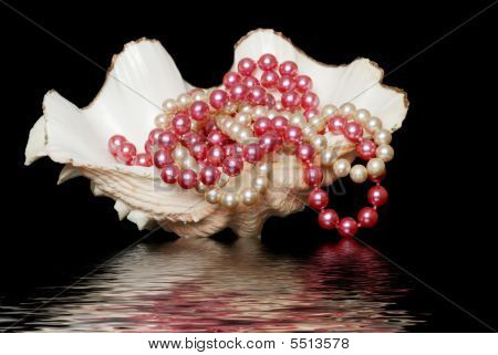 Pearl Necklaces In A Sea Shell With Water Reflection