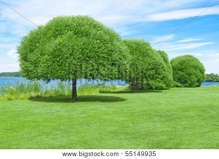Spacious Green Lawn With Beautiful Trees