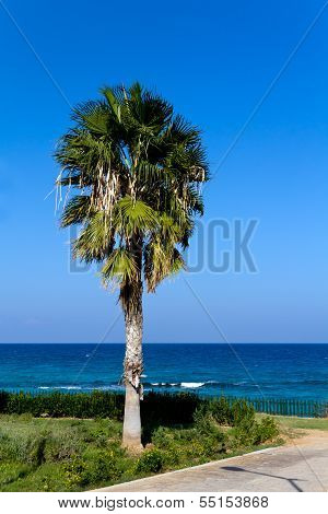 Summer Day,Palm on the Beach, Nissi Beach , Cyprus.