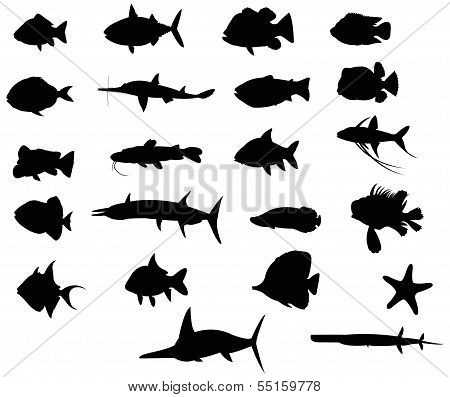 Sets Of Silhouette Fishes 4 (vector)