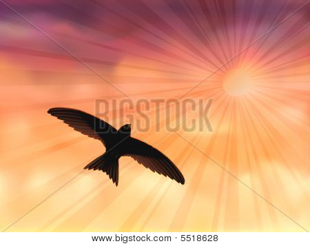 Swallow In The Evening