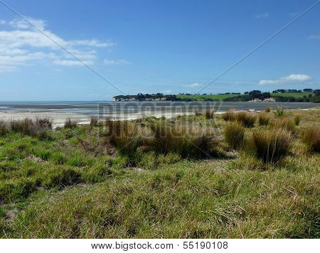 Coastal Area With Grass And Bushes