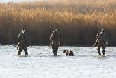 picture of marsh grass  - Duck Hunters walking through salt marsh with dog - JPG