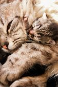 foto of compassion  - Newborn kitten and her mother hugs with compassion - JPG