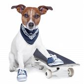 stock photo of skateboarding  - a dog with skateboard wearing blue sneakers - JPG