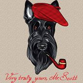 picture of beret  - hipster dog Scottish Terrier breed in red beret with a pipe - JPG