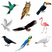 picture of flamingo  - Popular birds isolated on white colorful vector collection - JPG