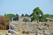 Ancient Temple Greek Ruins Acropolis - Paestum, Italy