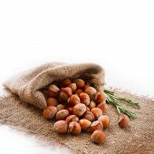 stock photo of cobnuts  - Hazelnuts - JPG