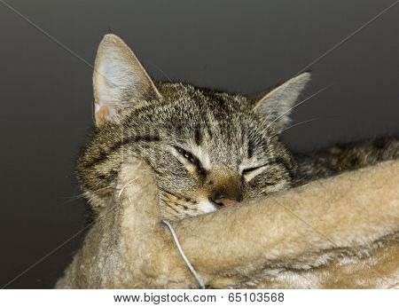 Tabby Cat Squiting Its Eye Suspiciously