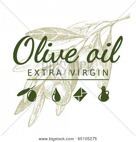 Hand drawn olive branch and olive sign