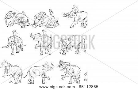 Elephant Show And Training With Mahout