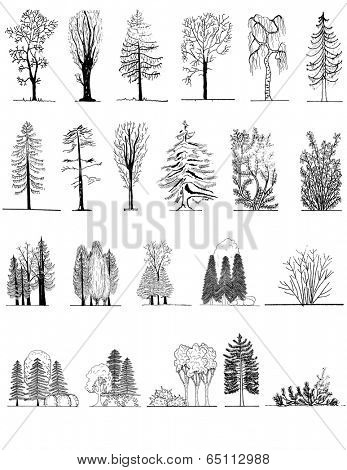 A set of tree silhouettes , for architectural or landscape design, black and white