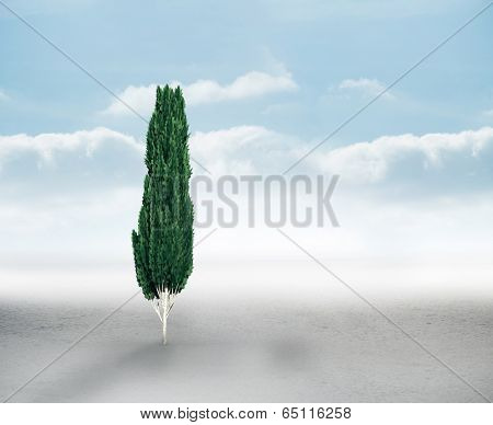 Tall tree with green foilage against cloudy landscape background