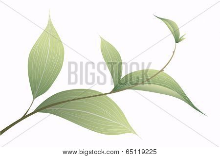 Tree branch with green leaves. Floral background. Vector illustration