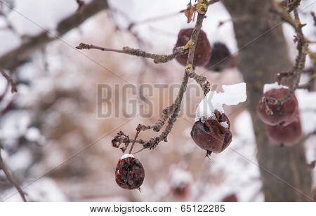 Winter landscape, rotten apple tree. Mountain village in the Bran,Romanian Carpathians