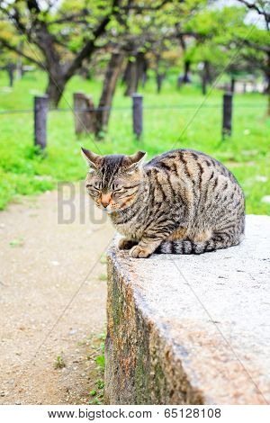 Japanese cat in the garden