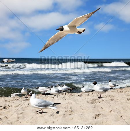 seagulls are flying against the beach