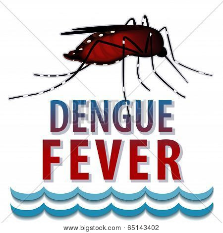 Dengue Fever Mosquito, Standing Water