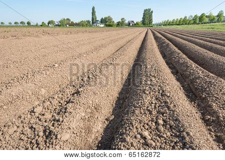Farmland With Converging Potato Ridges