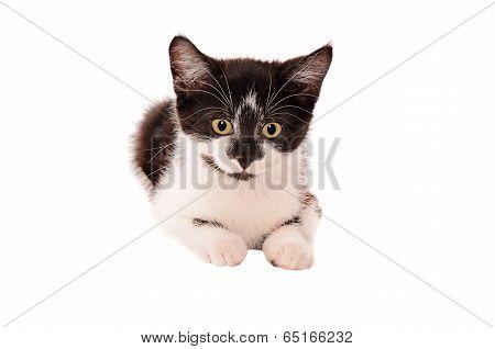 Adorable Sad Black And White Kitten