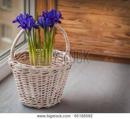 Irises In A White Basket On The Window