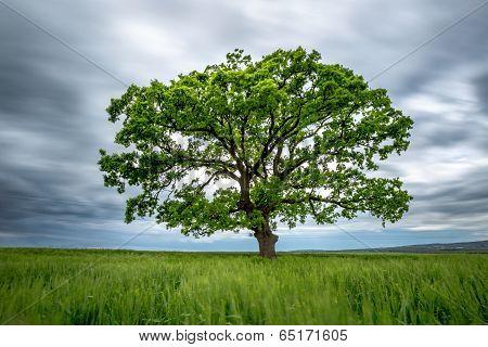 Blurred Long-exposure Green Tree In A Field