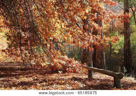Autumn Landscape3