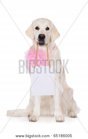 adorable golden retriever dog