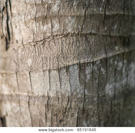 Bark Of Palm Tree. Wood Textured Background.