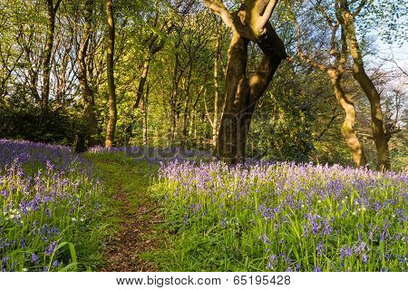 Bluebell Wood Trail