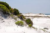 stock photo of gulf mexico  - Beautiful Sand Dunes in the Gulf of Mexico - JPG