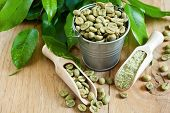 stock photo of coffee crop  - Green coffee - beans and ground. Selective focus.