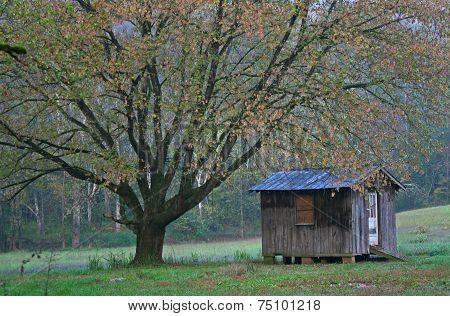 Tree & Shack