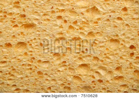 Grunge Surface Of Sponge