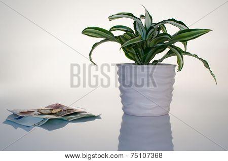 Plant Business Concept