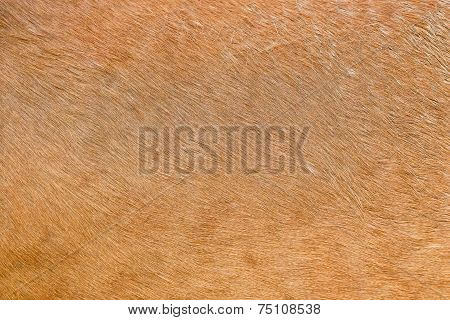 Chestnut Colored Horse Hair