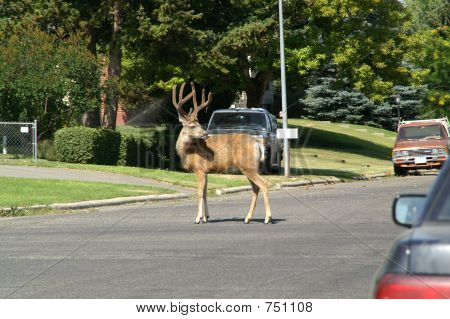 Traffic Director?