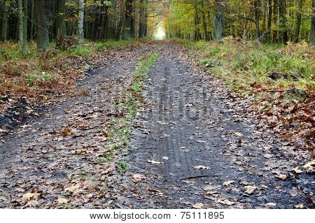 The forest road.