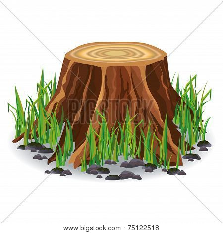 Tree Stump With Green Grass