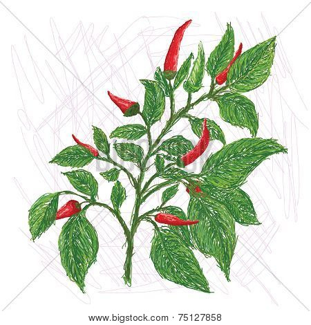 Chili Leaves