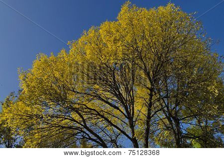 Colorful sunlit trees with autumnal leaves