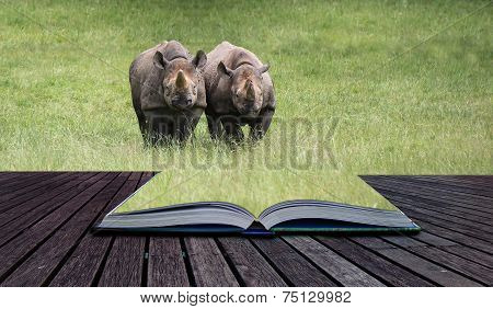 Black Rhinoceros Diceros Bicornis Michaeli In Captivity  Conceptual Book Image
