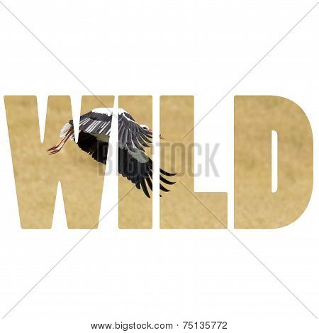 Word Wild A Stork In Flight In Suwalki Landscape Park, Poland.