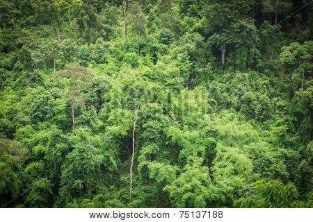 Forest Green Trees Background