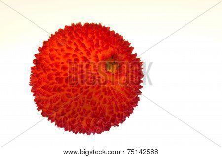 Strawberry Tree Fruit - Arbutus Unedo