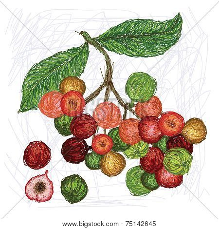 Cluster Fig