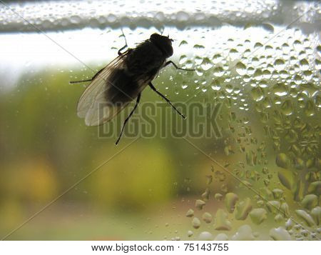 Insect And Window